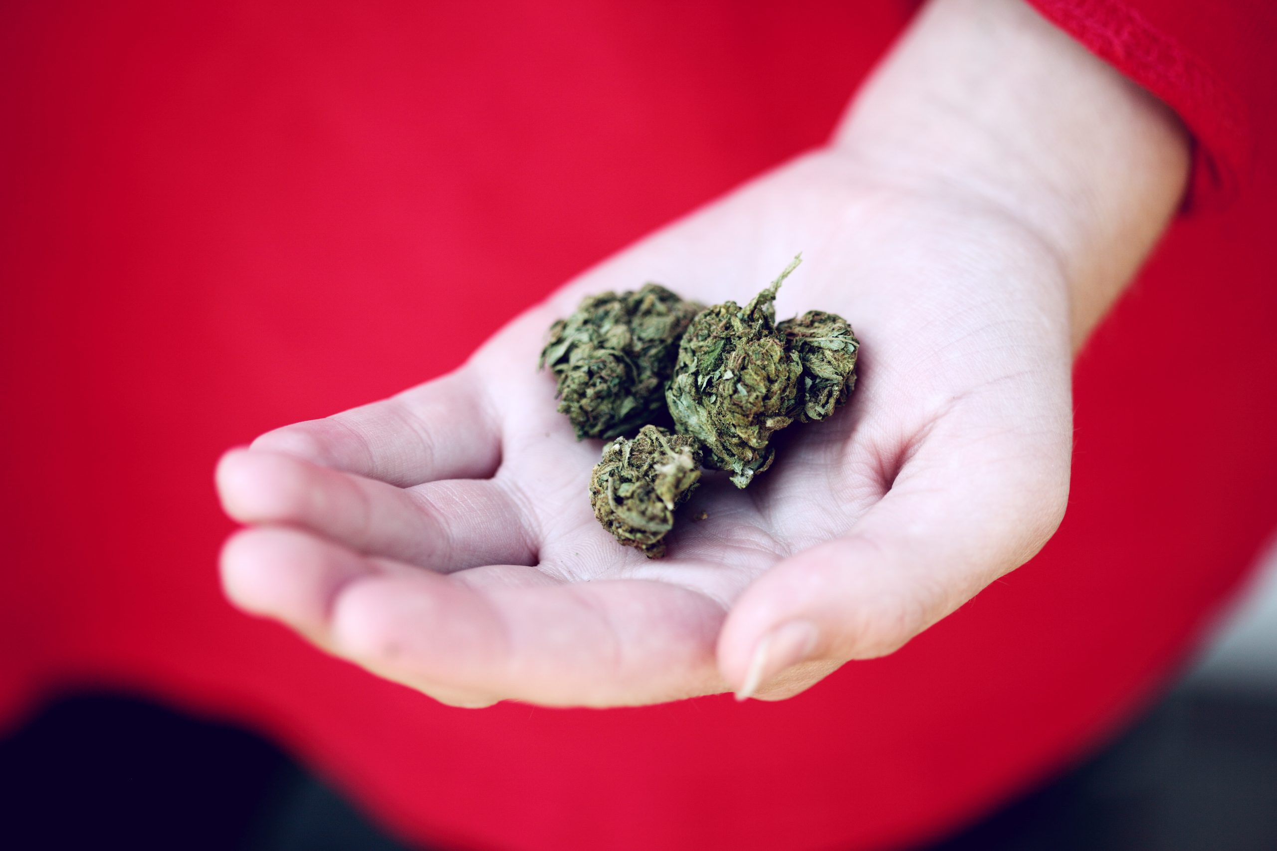 "What is a Florida Medical Marijuana ""License""?"