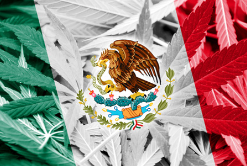 Mexican Cannabis Law Pushing Through Before Year Ends
